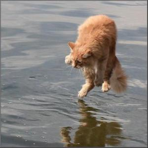 This cat is what I looked like trying to dive into a pool (if the cat was also holding its nose).
